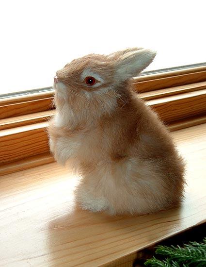 realistic rabbits bunnies furry animals from wildlife treasures