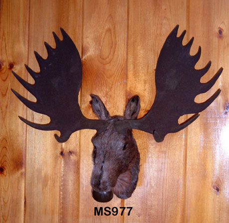 Well-known Lifelike & majectic Bull Moose Wall Mount Taxidermy Replica. QH05